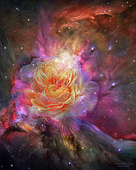 Universe Within A Rose by Carol Cavalaris