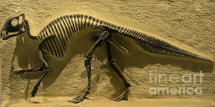 Wingsdomain Art and Photography - University of California Berkeley Dinosaur Fossil Inside The Valley Life Sciences Building DSC4640
