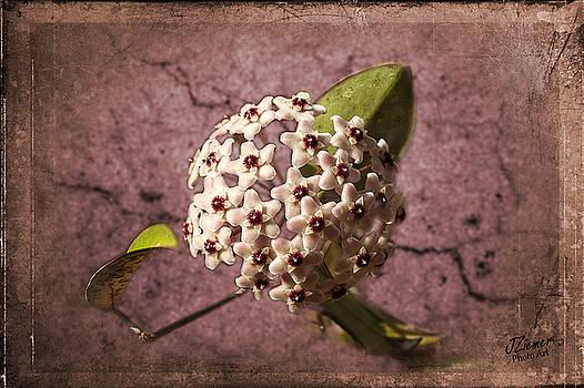 Unknown Flower by Jim Ziemer