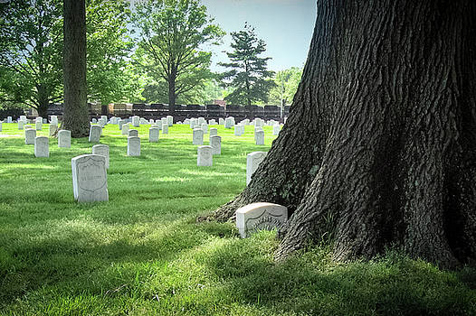 Unkown and Tree at Arlington Cemetery by Mary Lee Dereske