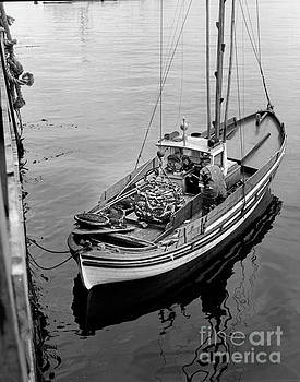 California Views Mr Pat Hathaway Archives - Unloading fish fom a Monterey Fishing Boat