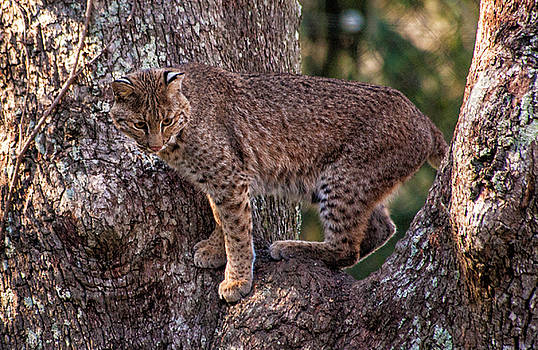 Up a Tree by Cathie Crow