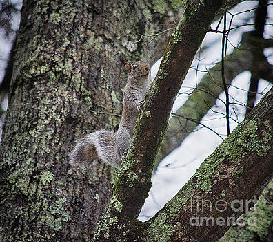 Up a Tree  by JW Hanley