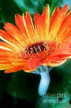 Up Close and Orange by Lisa Holmgreen