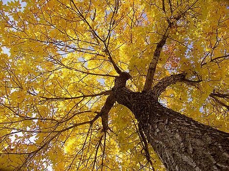 Robert VanDerWal - Up The Tree