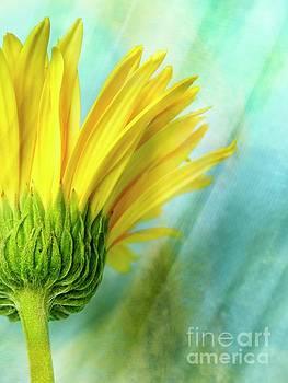 Uplifting by Ella Kaye Dickey
