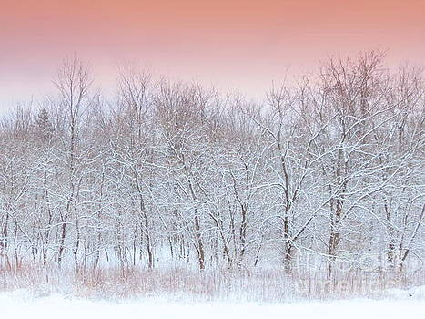 Upon A Winter's Dream Blush Sunris by Jack Martin