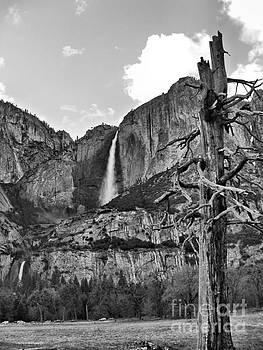 Upper and Lower Yosemite Falls by Nancy Chambers