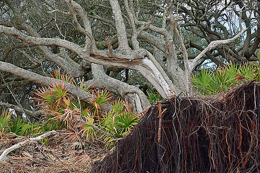 Uprooted by Bruce Gourley