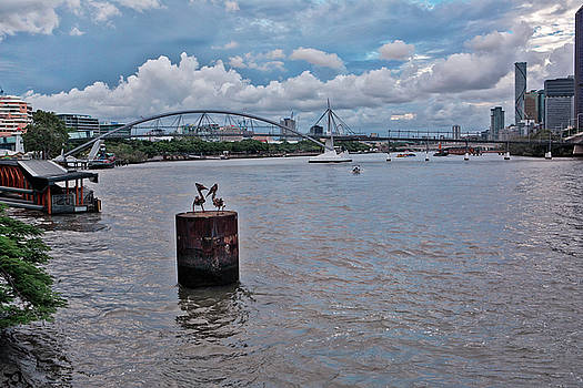 Urban Pelicans by Chris Hood