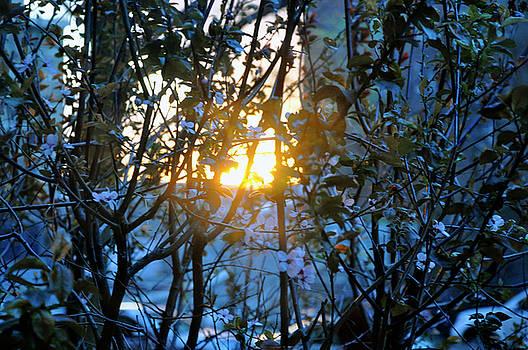 Urban Sunset by Sarah McKoy