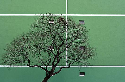 Urban Wall-fields by Csaba Molnar