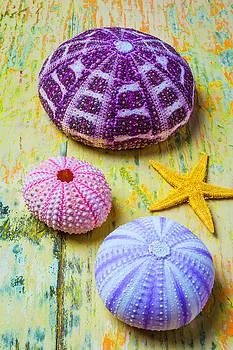 Urchin Still Life by Garry Gay