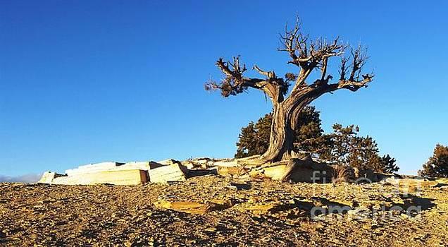 Utah Highlands by JT Peyton