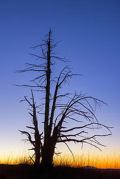 Utah Juniper and Dawn - Bryce Canyon by Thomas Schoeller
