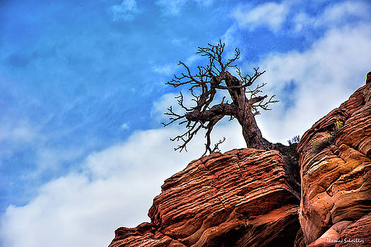 Utah Juniper on the Cliffs by Thomas Schoeller