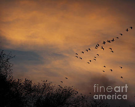 V Formation At Sunset  by Kathy M Krause