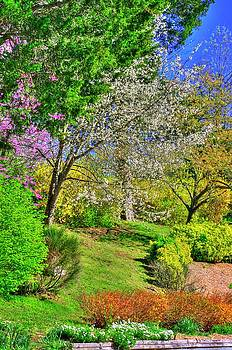 VA Country Roads - Spring Has Sprung - On the Grounds of the Natural Bridge, Rockbridge County by Michael Mazaika