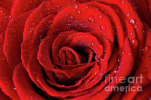 Valentine Swirl by Tracy Hall