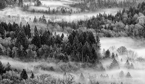 Valley Fog by Wes and Dotty Weber