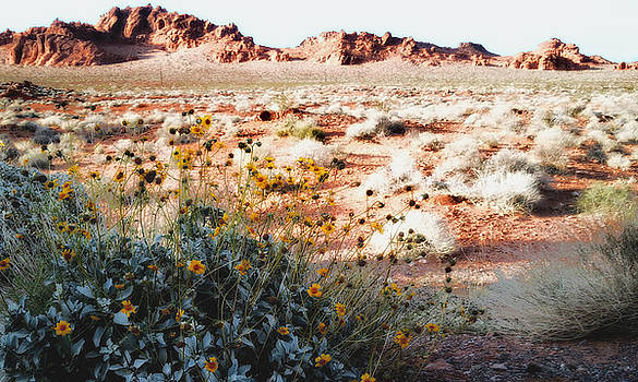 Valley of Fire by Sheryl Chapman Photography