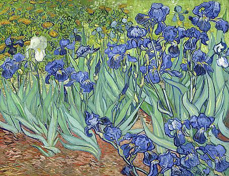 Van Gogh Irises by Bishopston Fine Art