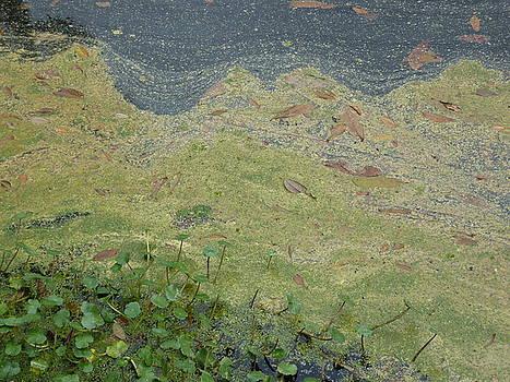 Van Gogh Verdin by Allison Wonderland