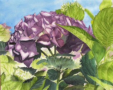 Vanessa's flower by Robert Thomaston