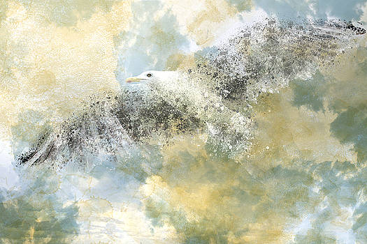 Vanishing Seagull by Melanie Viola