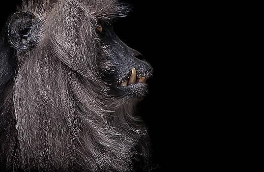 Vanity by Paul Neville