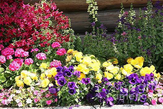 Chuck Kuhn - Variety Flowers