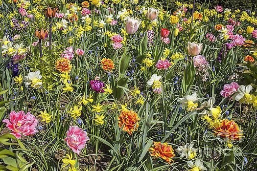 Patricia Hofmeester - Variety of colorful flowers