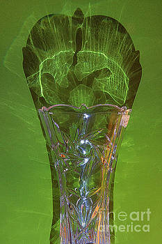 Vase and its shadow by Jim Wright