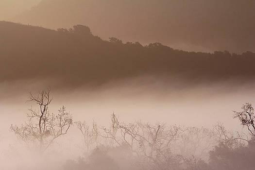 Robin Street-Morris - Veil of Fog