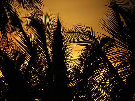 Veiled Sunset by Sandeep Gangadharan