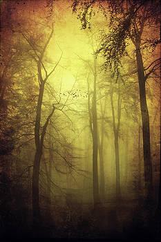 Veiled Trees by Dirk Wuestenhagen