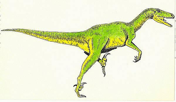 Velociraptor by Michael Vigliotti