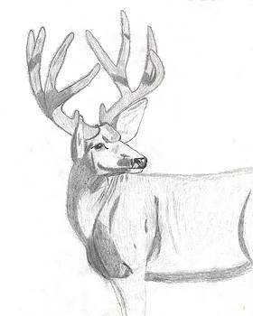 Velvet Buck by Chad Hinckley