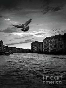 Venice Grand Canal by Gregory Dyer