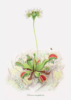 Venus Fly Trap  by Scott Bennett