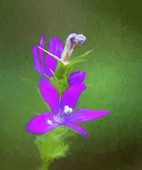 Purple Venus Looking Glass Wildflower  by Kathy Clark
