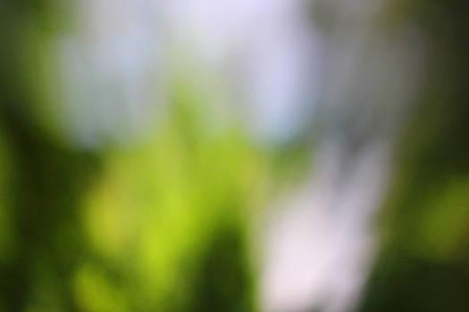 Carolyn Stagger Cokley - verde0048