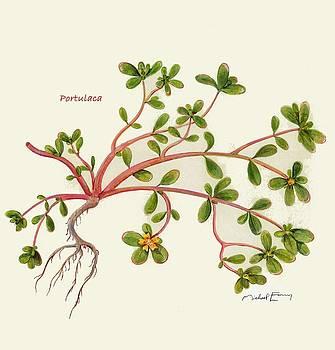 Verdolaga - Portulaca oleracea by Michael Earney