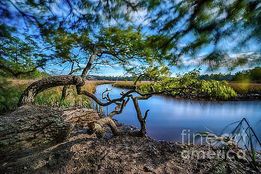 Vereen Memorial Gardens Little River, South Carolina by David Smith