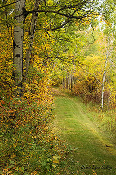 Vermilion Trail by Carrie Gallop