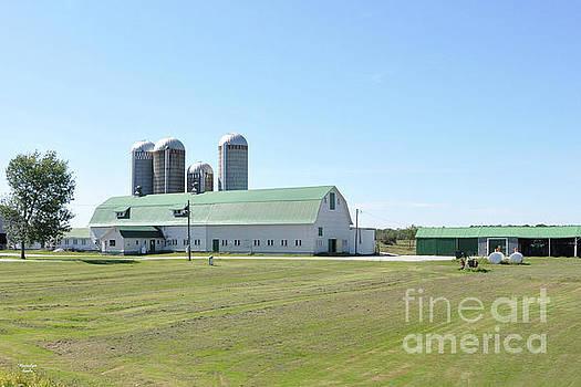 Vermont Dairy Farm by Wanda-Lynn Searles