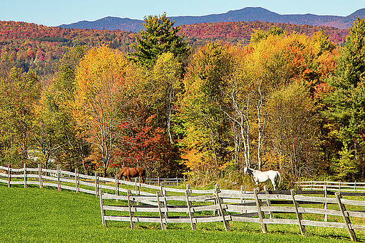 Vermont fall foliage above the farm by Jeff Folger