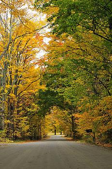 Vermont Foliage by Mandy Wiltse
