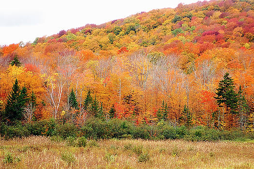 Vermont Foliage by Newman Artography