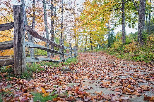 Vermont Foliage by Ryan McKee